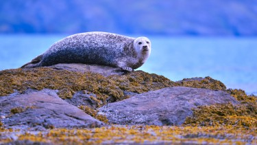 Seal spot off the Cairns of Coll