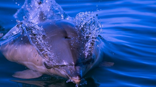 See dolphins on your day trip