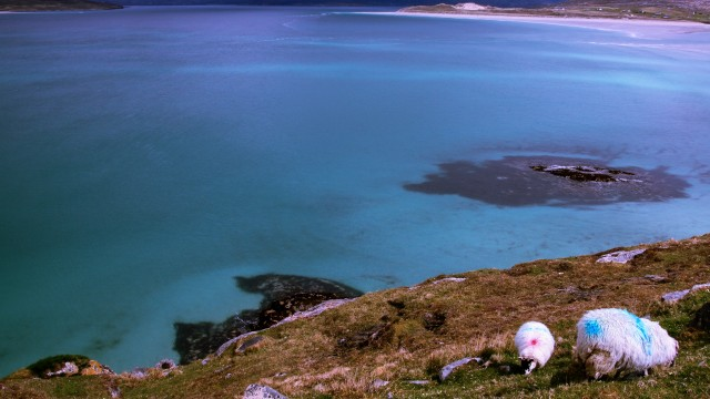 You'll see plenty of sheep roaming on the islands
