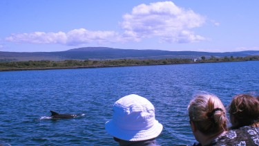 Mull Wildlife: full day whale watch trip