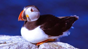 View Farne Island puffins on your boat trip