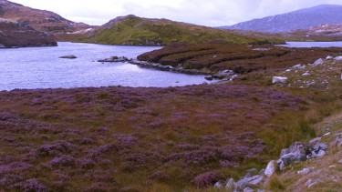 Heather clad hills on Harris