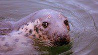 West Cork seals