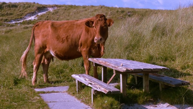 Meet the locals on Harris!