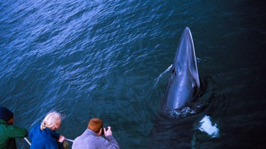 Enjoy a whale-watch trip on Mull
