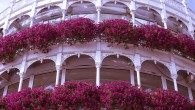 Floral balcony in Dublin