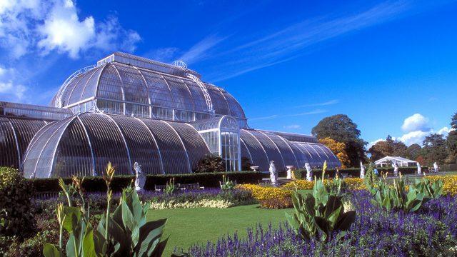 Palm Gardens at Kew Gardens