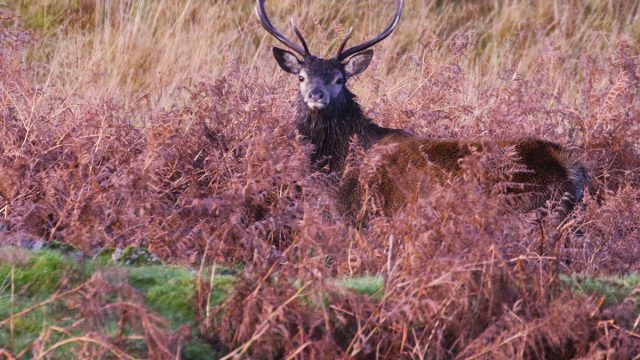 Spot magnificent stags on your wildlife safari
