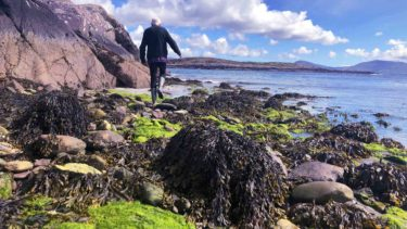 Wild Atlantic Way seaweed foraging